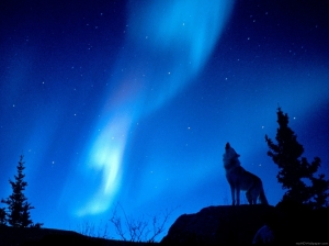 stoya-free-aurora-borealis-hd-481331