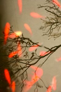 399px-Falling_leaves,_winter_(4150313498)
