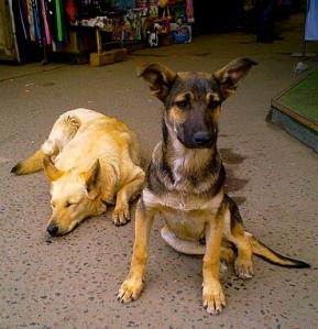 450px-Street_Dogs