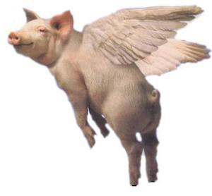 Flying_Pig