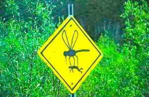 careful-mosquito-sign-dangerous